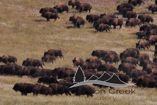 buffalo-4m4-91hl.jpg