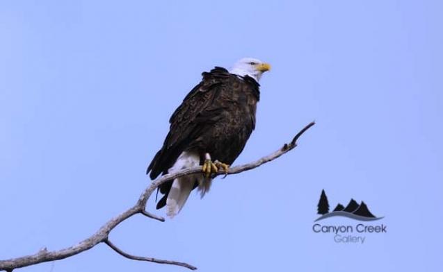 eagle-2-9xt-qprh.jpg